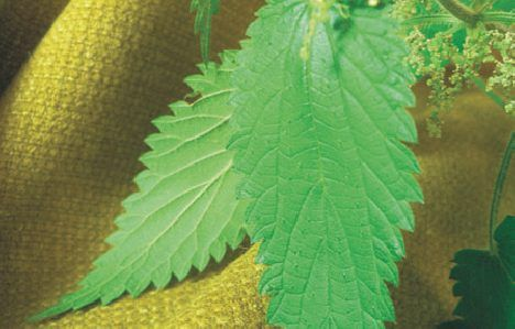 sting-plus-nettle-fabric